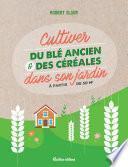 Cultiver du blé ancien et des céréales dans son jardin