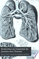 Recherches sur l'anatomie du poumon chez l'homme